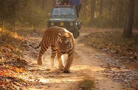 Go For A Budget Safari In Tadoba Tiger Resort