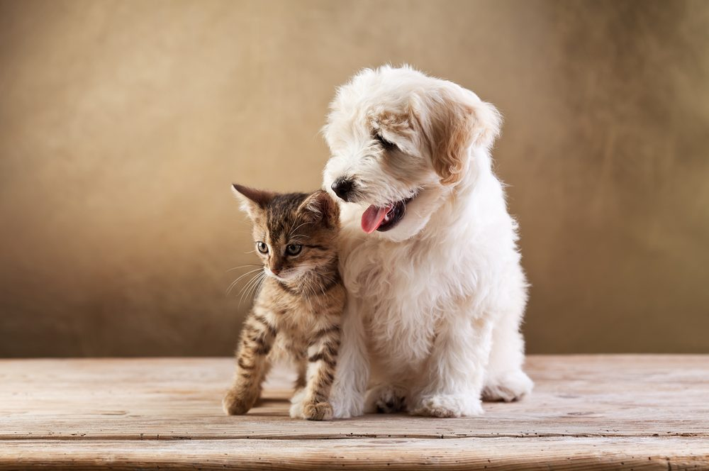 Tips On Picking The Right Pet For You